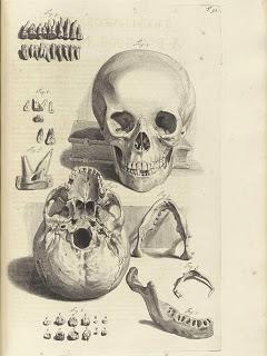 public-domain-images-skull