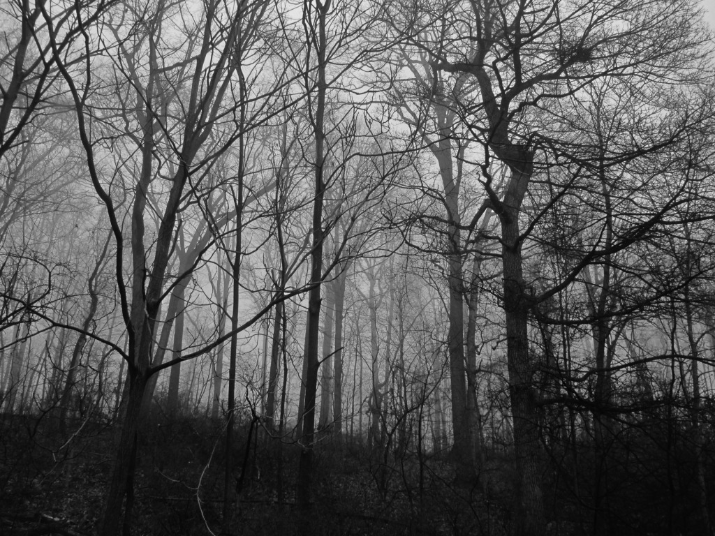 scary-woods